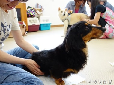 犬の整体体験会