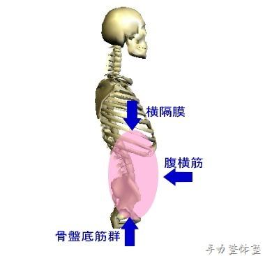腹圧を調整する筋群