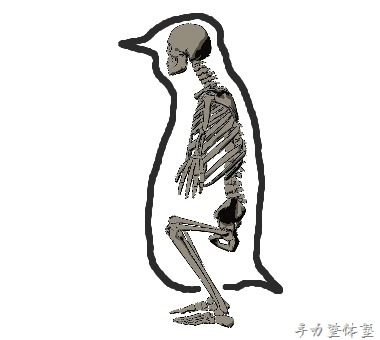 ペンギン骨格