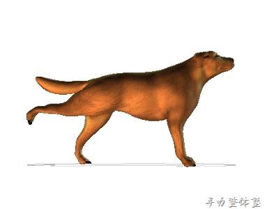 犬股の関節