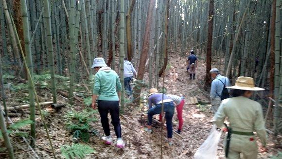 合宿タケノコ掘り