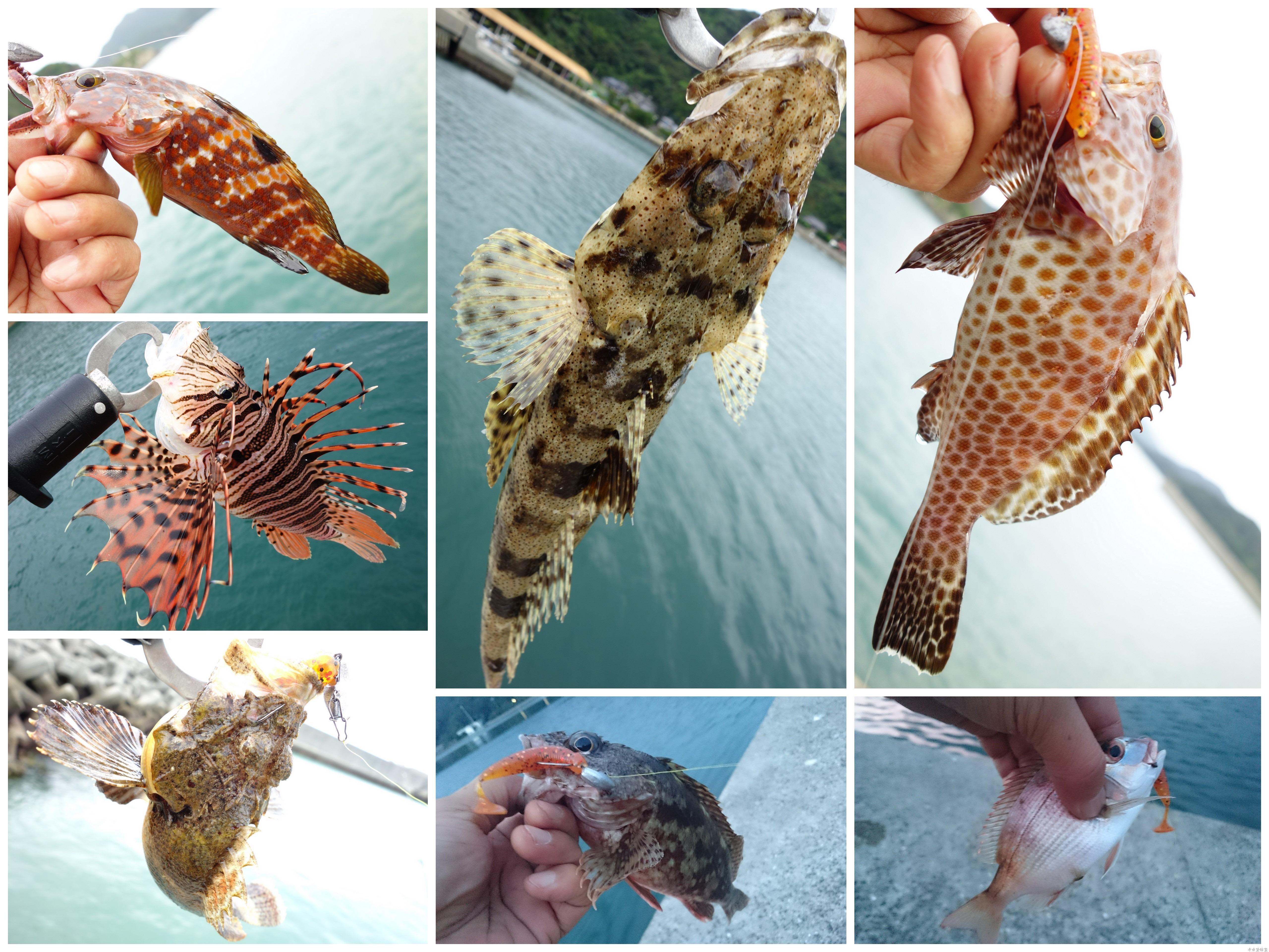 天草の魚達