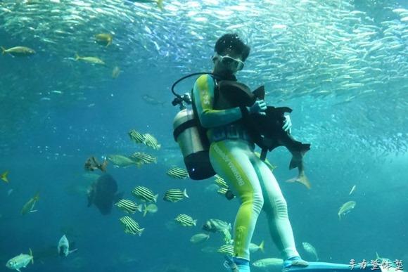 ネコザメのたまちゃんを抱いて泳ぐお兄さん
