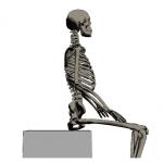 座る骨は何処にあるか
