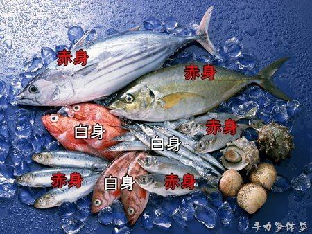 魚からみる筋肉の話し