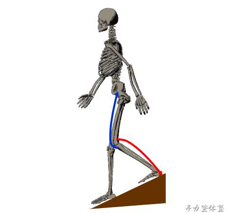階段・山道の下りで膝が痛むワケ