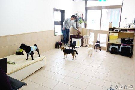 辻堂ドッグホテル・整体『笑う犬』