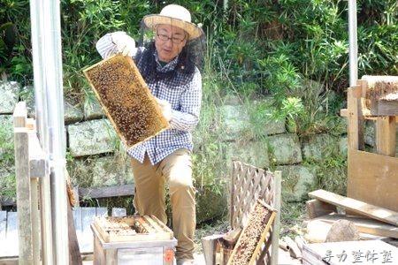 養蜂に精を出す卒業生