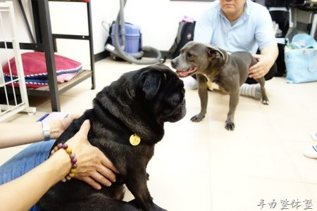 骨格から考える人と犬の違い