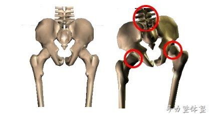 骨盤帯を動かすのはココです