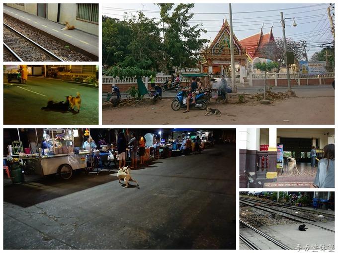 タイの犬たち