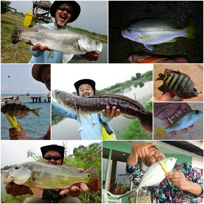 タイランド魚コレクション