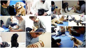犬の整体師養成講座