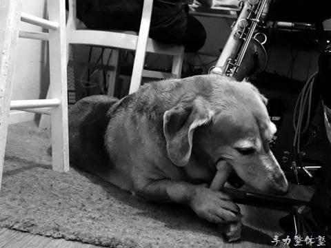 擬人化される犬の気持ちを犬になりきって考えてみた