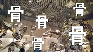 整体師になると博物館が面白くなります