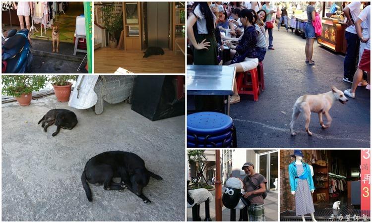 台湾の犬たち
