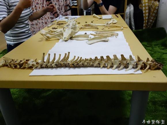 犬の骨格標本作成中@手力整体塾