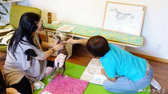 会津で飼い主さん向け犬の整体講座開催!整体やSKY