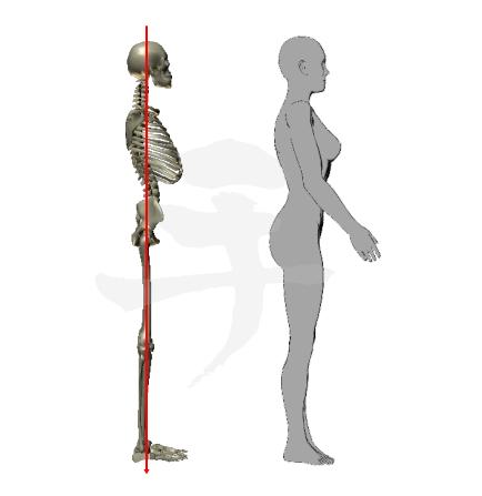 解剖学的基本肢位【0度】