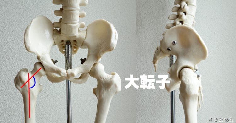 股関節頸体角と大転子