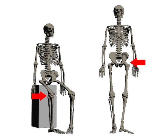 つま先の向きを変えるのは膝関節か股関節です