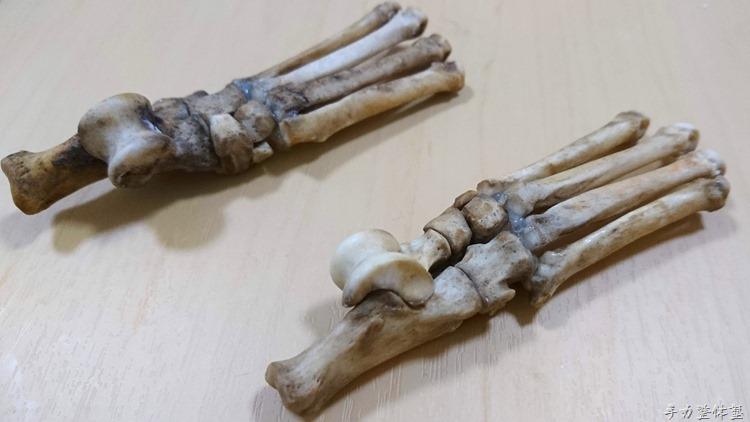 【本物】犬の足の骨