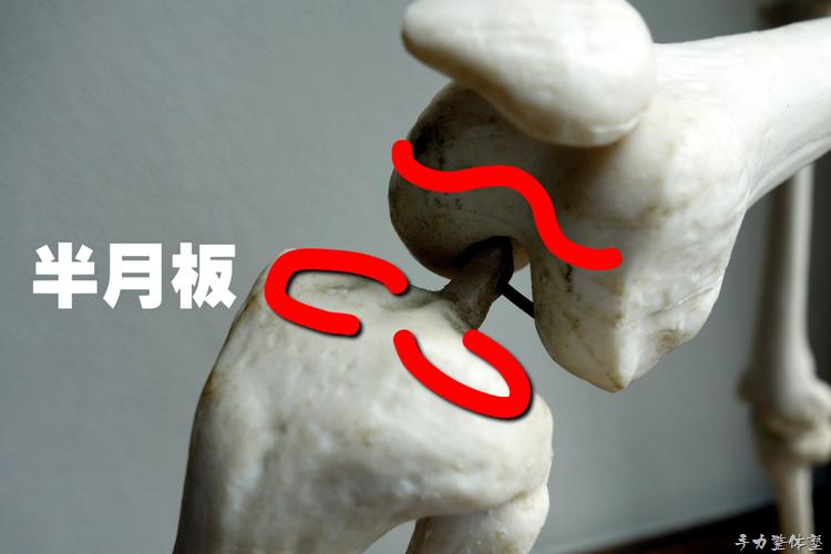 つま先の向きを変える膝の構造