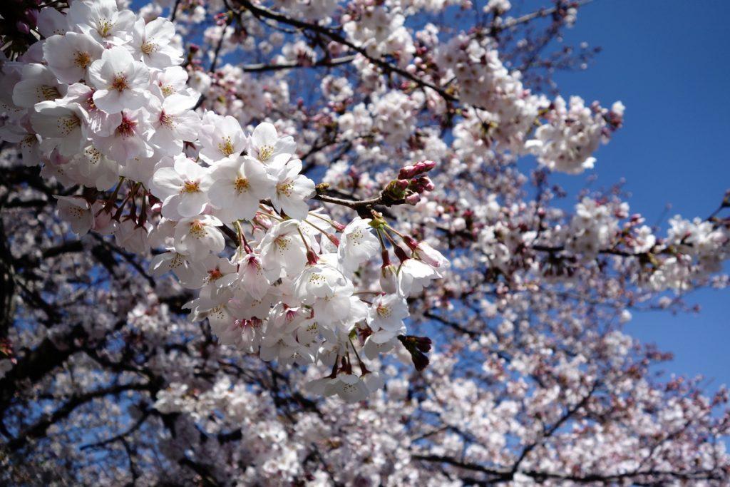 桜を見る会だけじゃない税金の無駄遣い