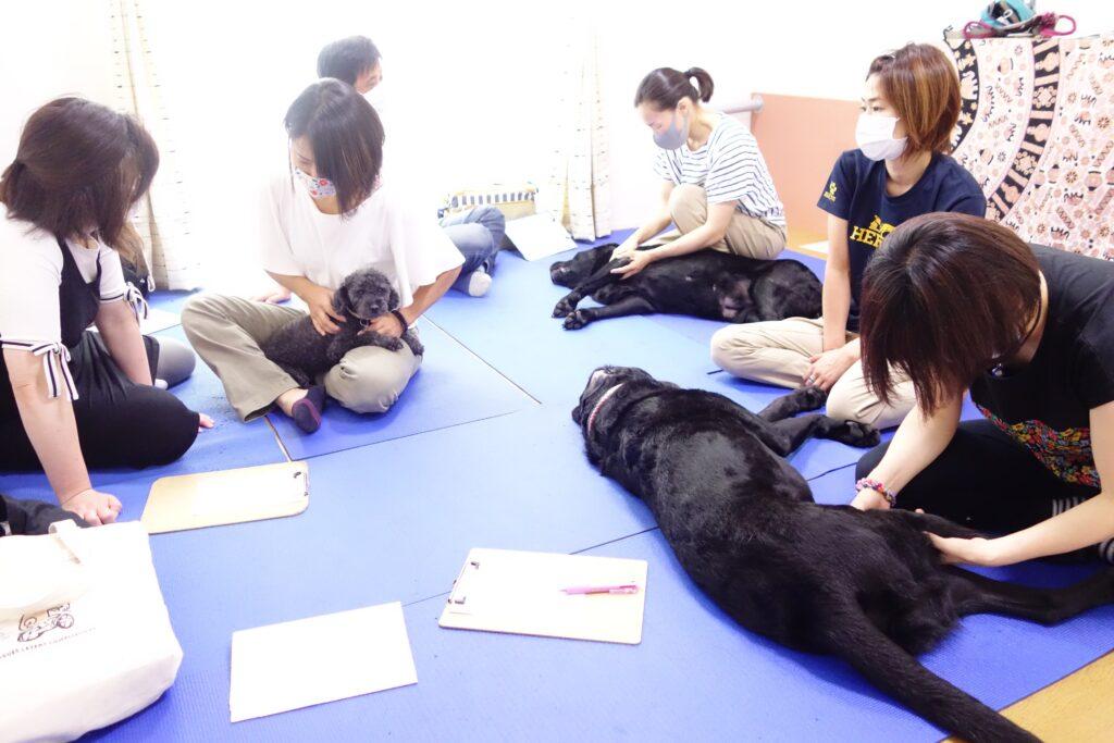 【犬の整体】施術自体は誰でも出来る・・・けれど