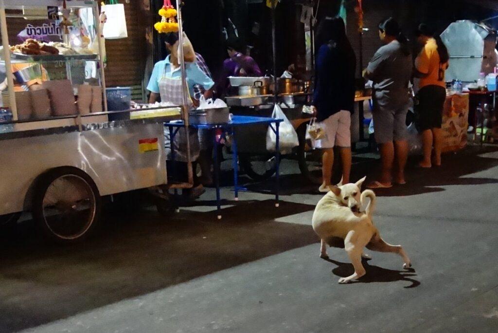 タイの野良犬は幸せそうに見える