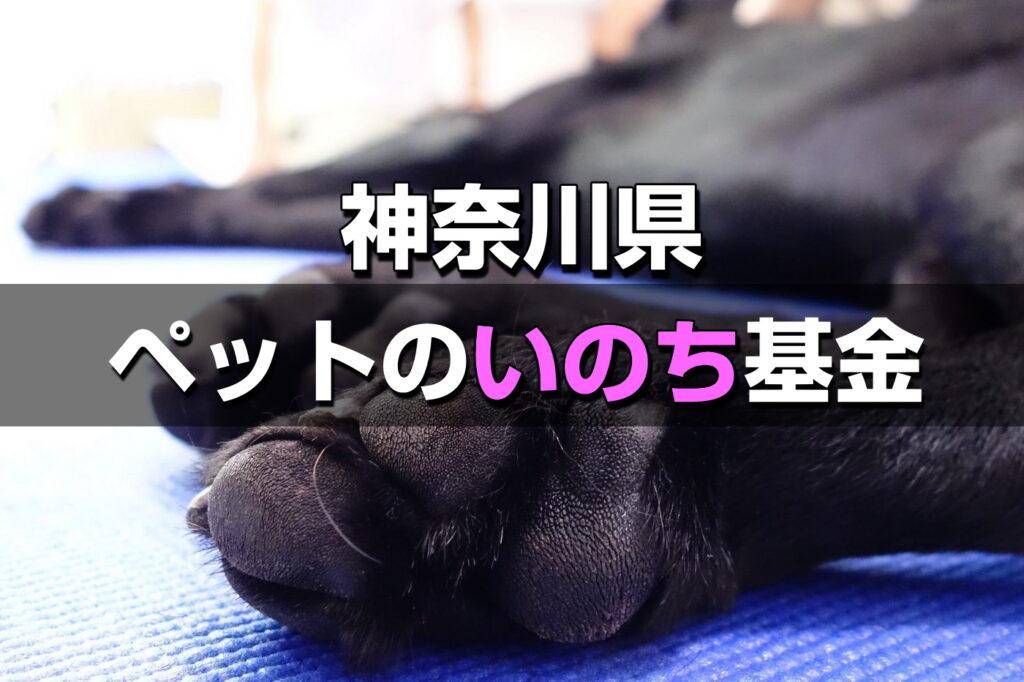 神奈川県の犬猫殺処分はゼロ更新中!【神奈川ペットのいのち基金】支援表明