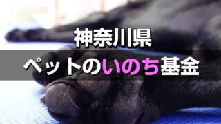 【神奈川ペットのいのち基金】支援表明