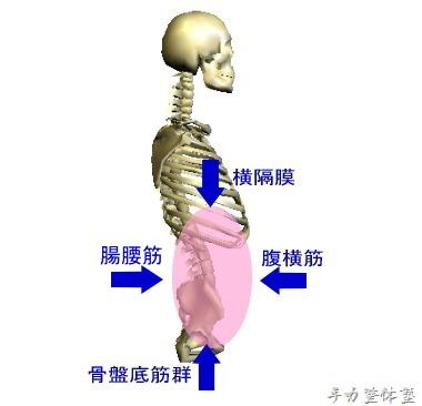 腹圧は四方向から調整